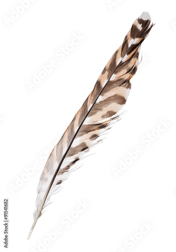 three color forest bird isolated feather