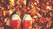Shoes Red Shoes In Autumn Leaves
