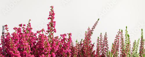 Fotografie, Obraz Herbstliches Panorama, freigestellt