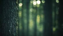 Tronc D'arbre, Gros Plan Et Arrière-plan Flou