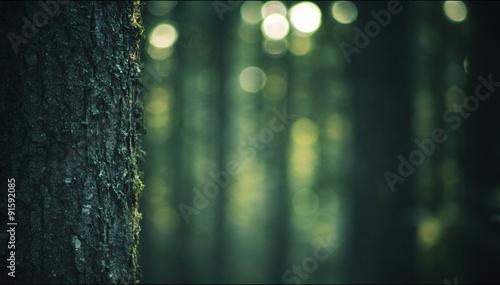 Fotografie, Obraz  tronc d'arbre, gros plan et arrière-plan flou