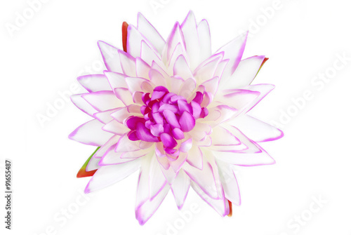Fotografering  Lily pink isolated on white
