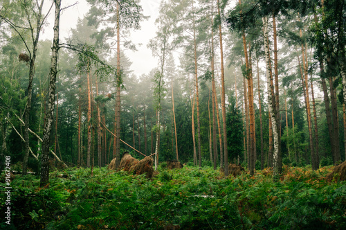 Obraz In the middle of the forest - fototapety do salonu