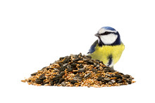 Blue Tit On The Right Side Of A Pile Of Mixed Bird Seeds On White Background