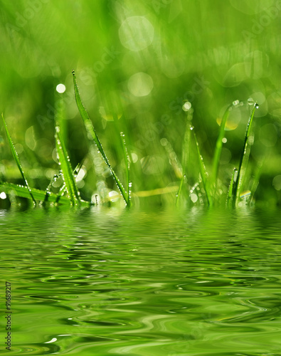 Fotobehang Fontaine dewy meadow grass - background with empty space for text