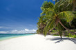 Tropical beach with coconut palm tree, white sand and turquoise