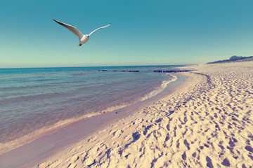FototapetaBaltic sea beach landscape with blue sea white sand and seagull