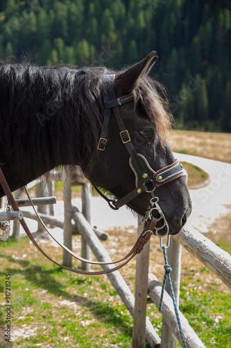 Fényképezés  cavallo a riposo