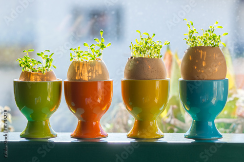 Foto op Plexiglas Cyprus four color egg cups with growing green cress