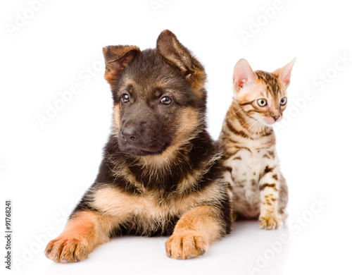 bengal cat and german shepherd puppy dog looking at camera. isol © Ermolaev Alexandr