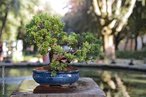 La pose en embrasure Bonsai vita