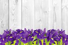 Blueflag Or Iris Flower On Whi...