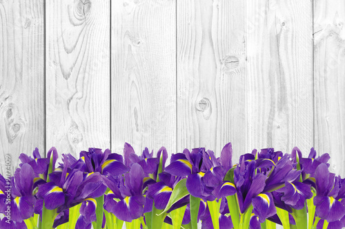 Poster Iris Blueflag or iris flower on white wooden background