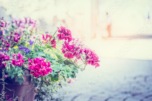 geranium flowers in a pot on the street on solar background blur city