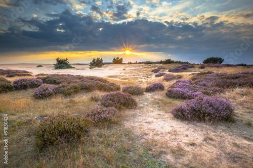 Photo Hoge Veluwe Sand Heathland