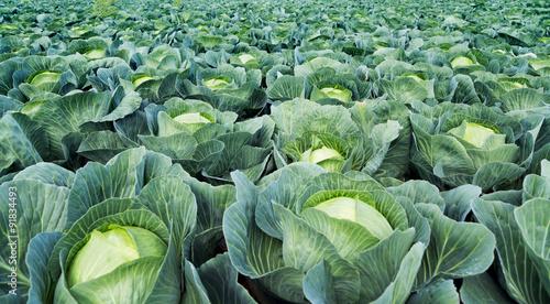 direkt vom Gemüsebauer Tapéta, Fotótapéta