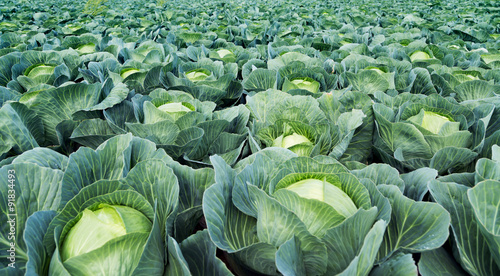 direkt vom Gemüsebauer Fototapeta