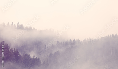 Fotobehang Bossen Fog in the forest