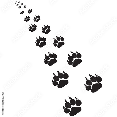 Fototapeta premium Footprints of a big cat