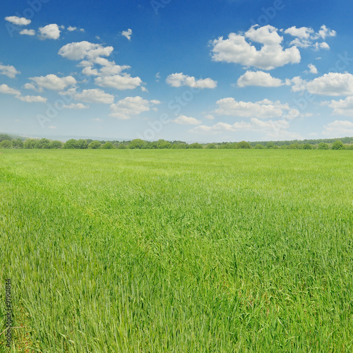 Foto op Plexiglas Weide, Moeras green field and blue sky with light clouds