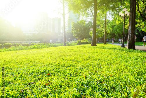 Fotografija  green park under sunshine