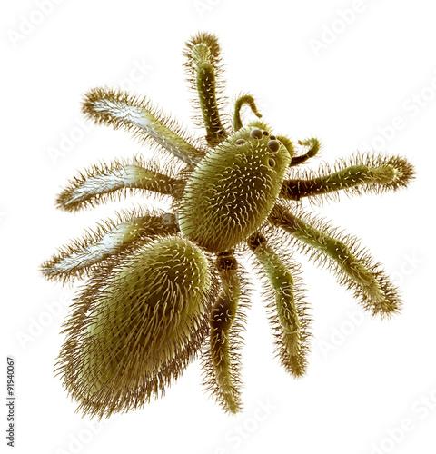 Valokuvatapetti SEM style illustration of a spider