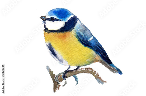 Foto Watercolor illustration of a blue tit, isolated on white background