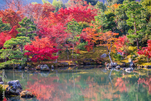 Japanese garden during falling season - 91948631