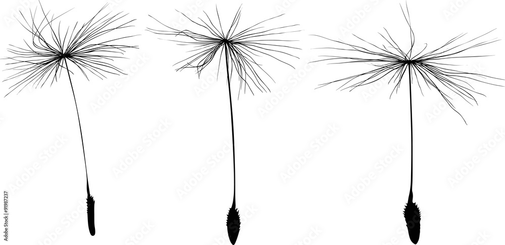 Fototapety, obrazy: three black dandelion seeds silhouette isolated on white