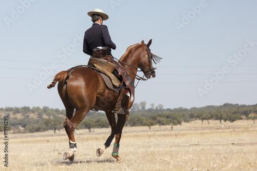 La pose en embrasure Vache Vaquero montando a caballo. Paseo a caballo. Deporte ecuestre. Equitación deportiva.