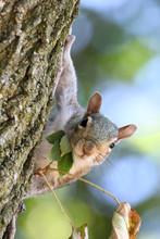 Squirrel & Leaves