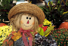 Scarecrow Doll Decoration Among Some Mums And Plants