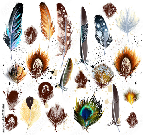 Big set of detailed bird feathers in realistic and engraved styl