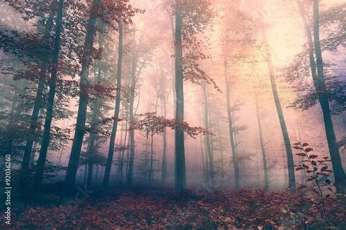 Fototapeta Grunge beautiful red colored foggy forest landscape background Grunge filter effect used
