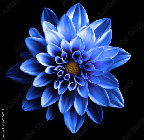 Poster de jardin Dahlia Surreal dark chrome blue flower dahlia macro isolated on black
