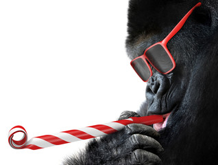 Funny gorilla with red sung...