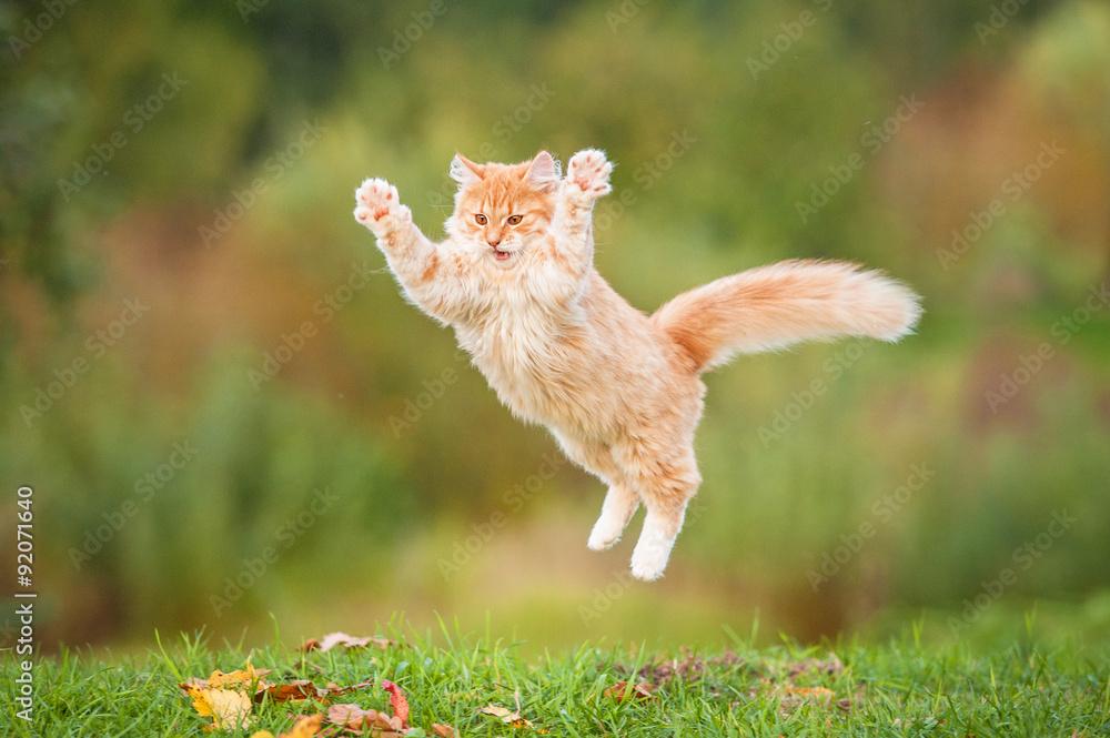 Śmieszny czerwony kota latanie w powietrzu w jesieni <span>plik: #92071640 | autor: Rita Kochmarjova</span>