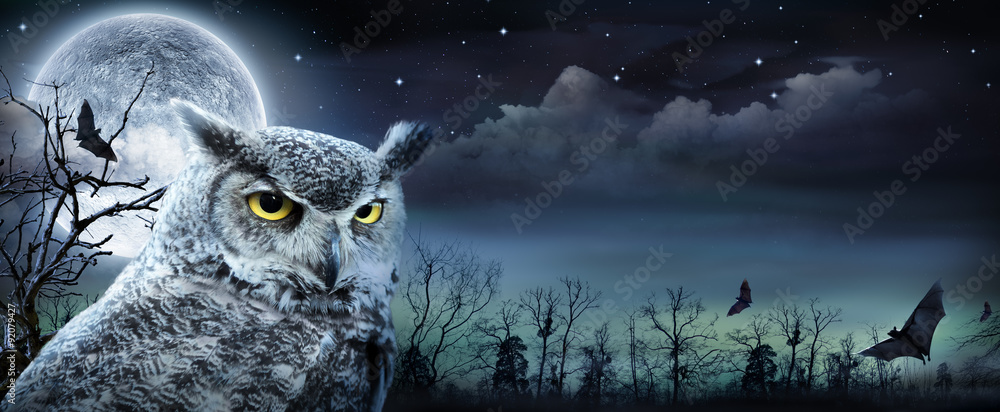 Fototapety, obrazy: Halloween Scene With Owl And Full Moon