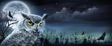 Halloween Scene With Owl And Full Moon