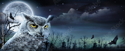 Photo Halloween Scene With Owl And Full Moon