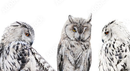 set of isolated black and white owls