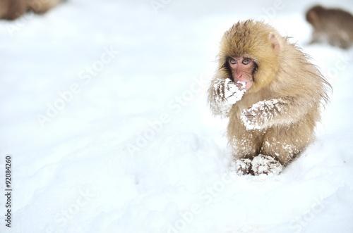 In de dag Aap 雪の上のニホンザルの子供