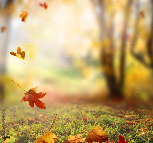 Staande foto Herfst Falling Autumn Leaves background