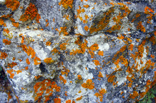 Moss And Lichen On A Rock Clos...