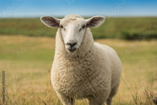 Foto op Canvas Schapen Schafe an der Nordsee