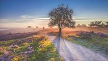 Beautiful Sunrise In A Dutch L...