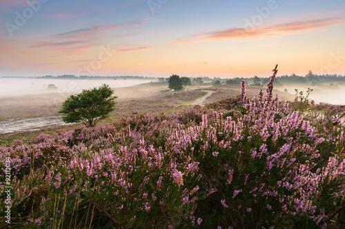 Foto auf Acrylglas Bestsellers Romantic sunrise in a Dutch nature moorland
