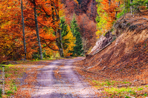 Foto op Canvas Diepbruine Footpath winding through colorful forest