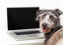 Happy Dog And Blank Screen Com...