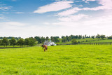Horses at horse farm. Country landscape.